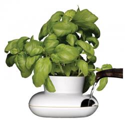 Herbs & Spices — HOLD wazon na zioła, mały - SAGAFORM