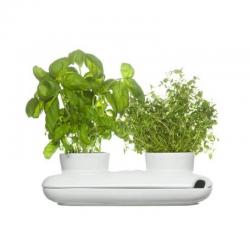 Herbs & Spices — podwójny wazon na zioła - SAGAFORM